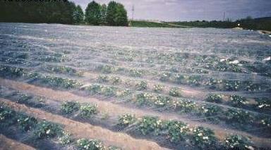 Агроволокно белое, плотность 17 г/м.кв.