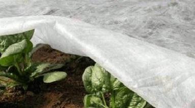 Агроволокно белое, плотность 23 г/м.кв